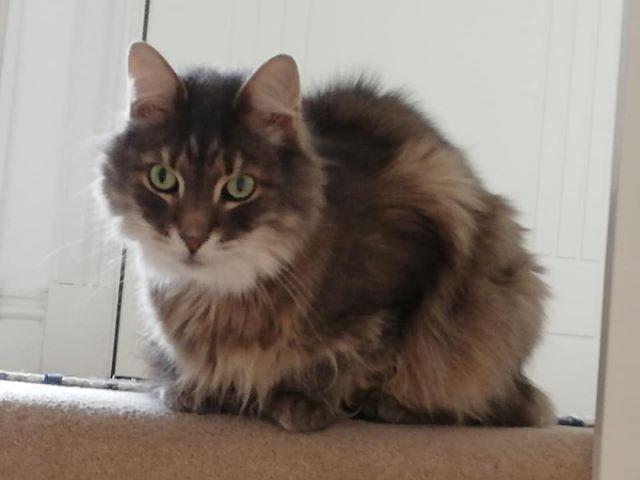Cat Sitter Livingston Pet Services