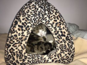 Cat and pet sitter Murieston West Lothian