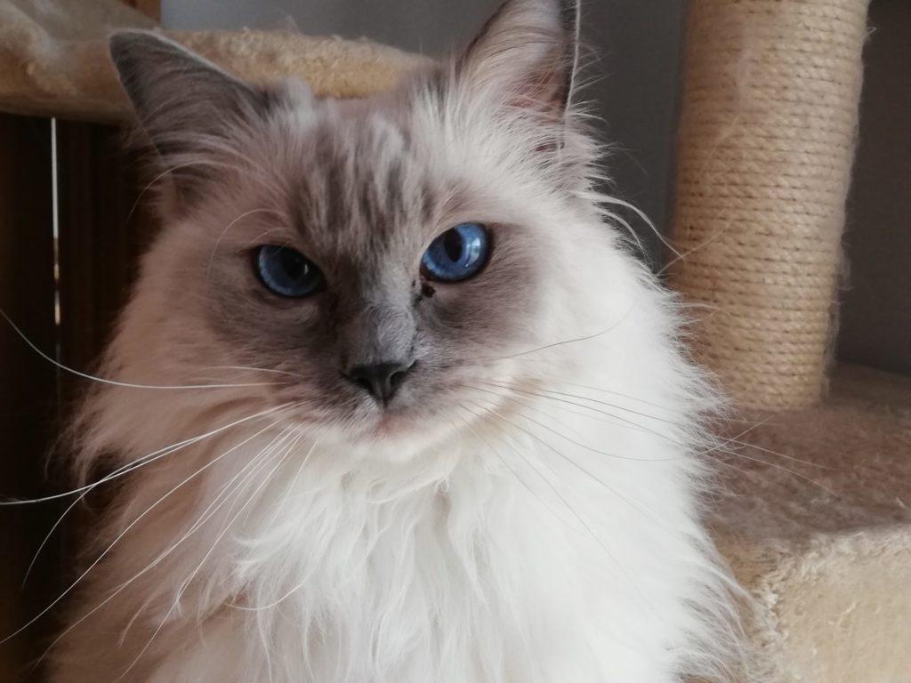 Livingston Cat Sitter