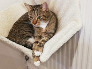 Cat Sitter Livingston Bathgate