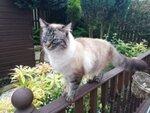 Whitburn Pet Sitter Cat Sitter West Lothian