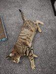 Armadale Cat Sitting Service