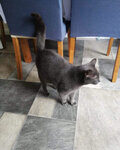 Pumpherston Cat Sitting Service West Lothian