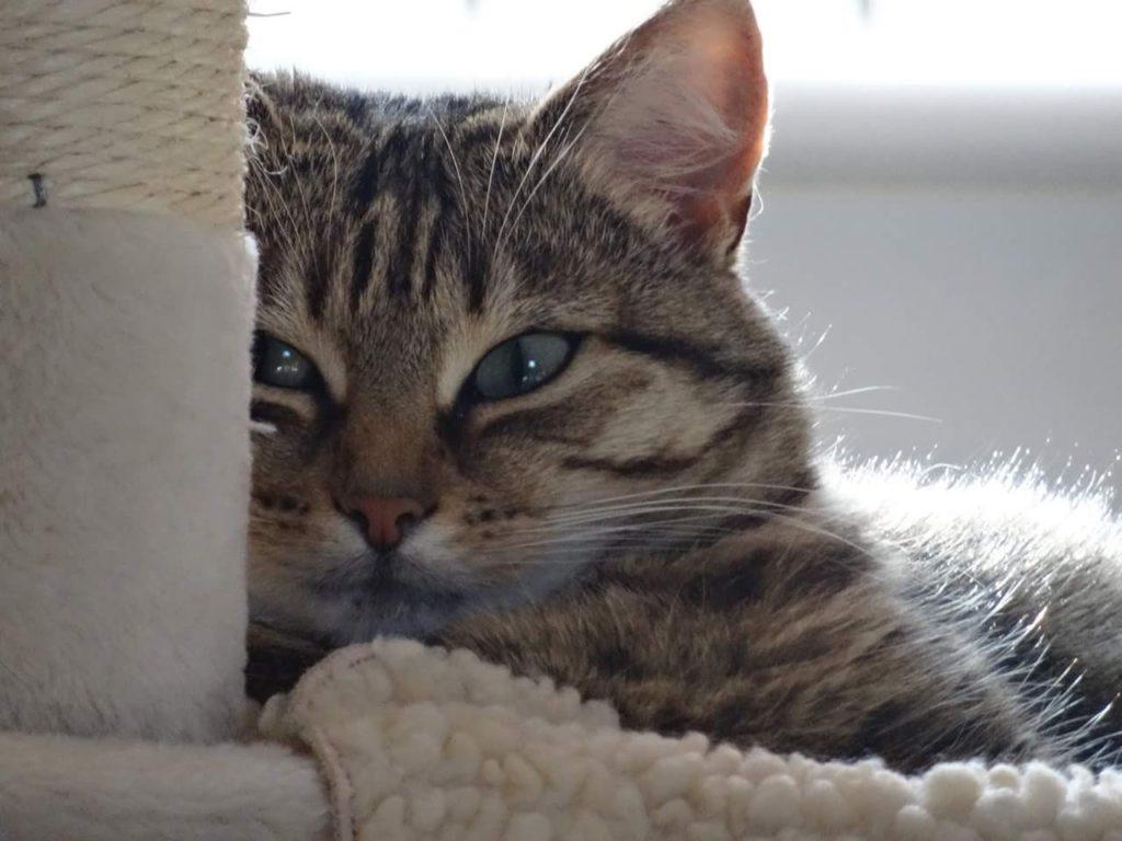 Cat Sitting Broxburn