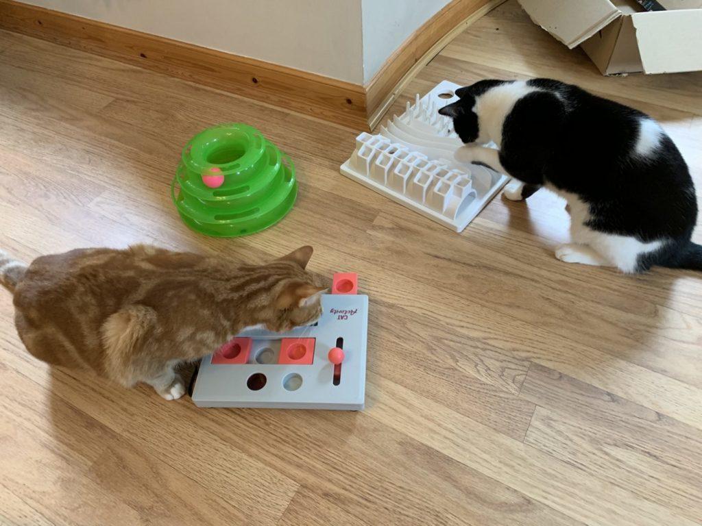 Cat Sitter West Lothian