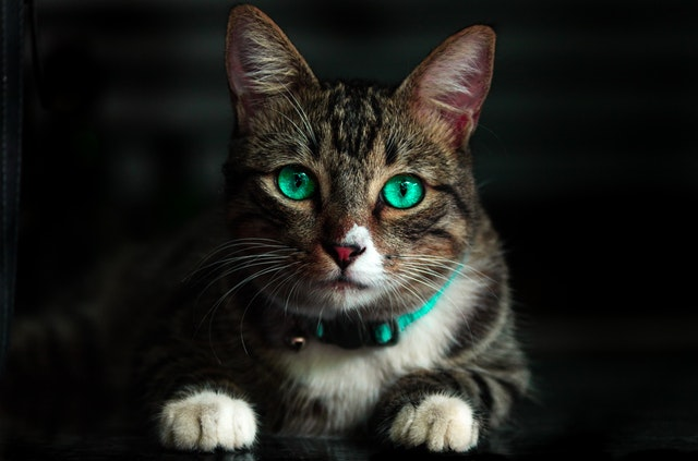 Cat Sitter Linlithgow