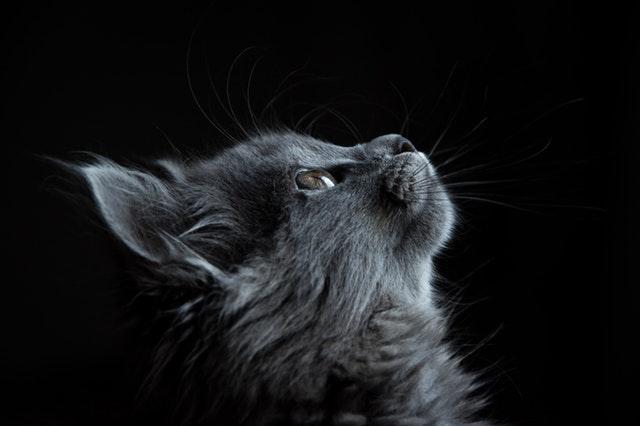 Cat Sitter Armadale