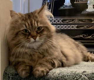 Murieston Cat Sitting Service West Lothian