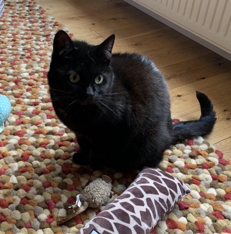 Pet Sitting Services West Lothian