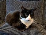 Armadale Cat Sitter West Lothian