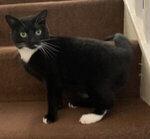 Bathgate Cat Sitter West Lothian