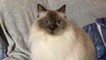 Kirknewton Cat Sitting Service West Lothian