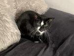 Livingston Pet Sitting Service West Lothian Cat Sitter