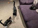 Uphall Cat Services Pet Sitter West Lothian