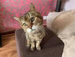 Mid Calder Cat Sitter West Lothian