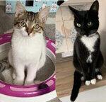 Whitburn Cat Sitter West Lothian