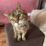 West Lothian Cat Sitting Service