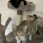 Kirknewton Cat Sitter West Lothian