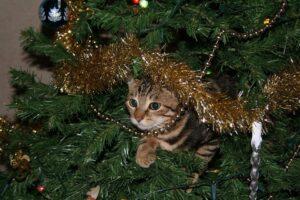 Cat Sitter West Lothian Livingston