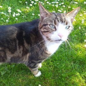 Livingston Cat Sitter Pet Sitter West Lothian