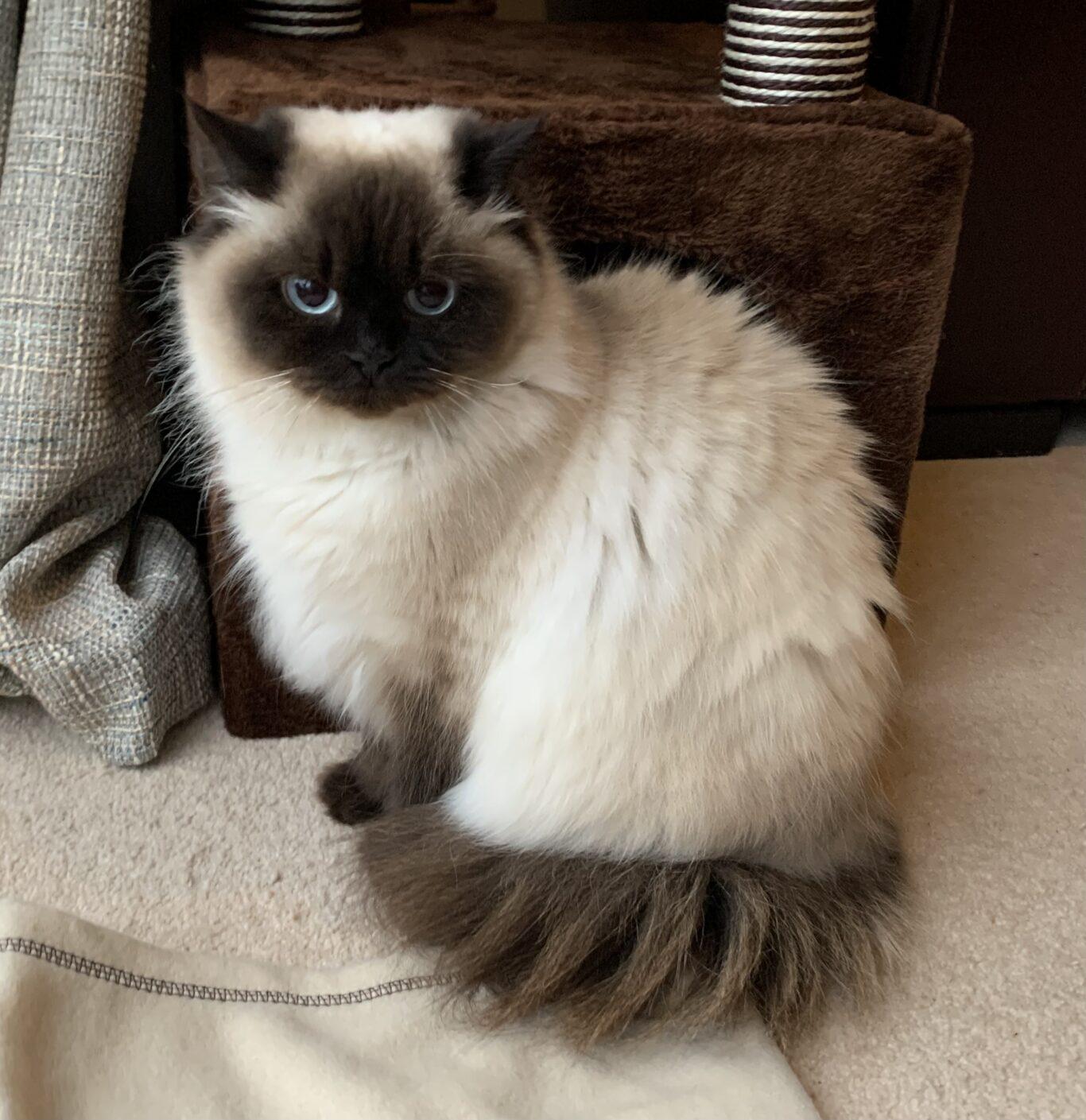 Cat Sitter Pet Services West Lothian Livingston