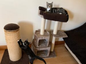 Cat Sitting Service West Lothian