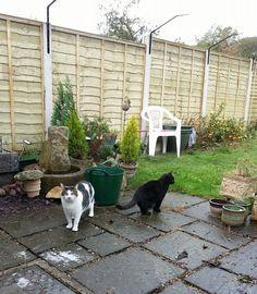 Pet Services West Lothian Cat Sitter