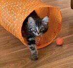 West Lothian Pet Services