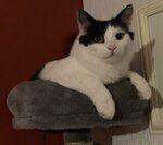 Cat Sitting Service Bathgate West Lothian